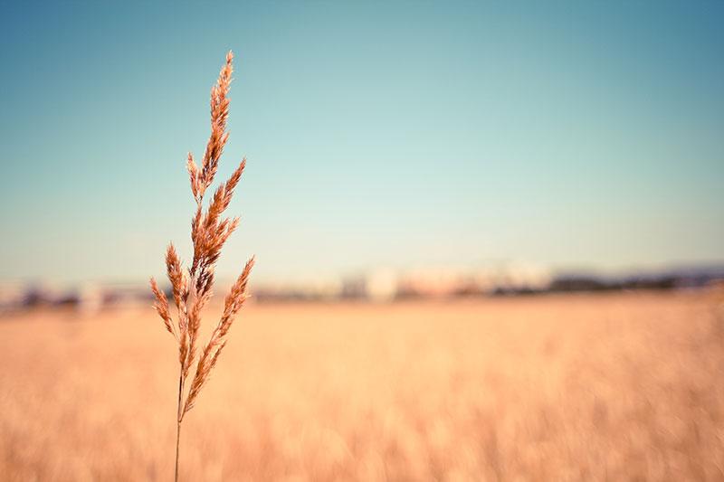 Coromandel Rural Insurance Options
